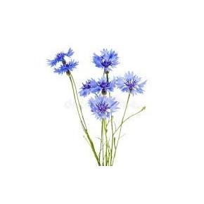 Poudre de fleurs de centaurée