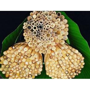 Pailles en bambou (22Cm)