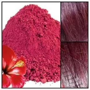 Hibiscus d'Egypte